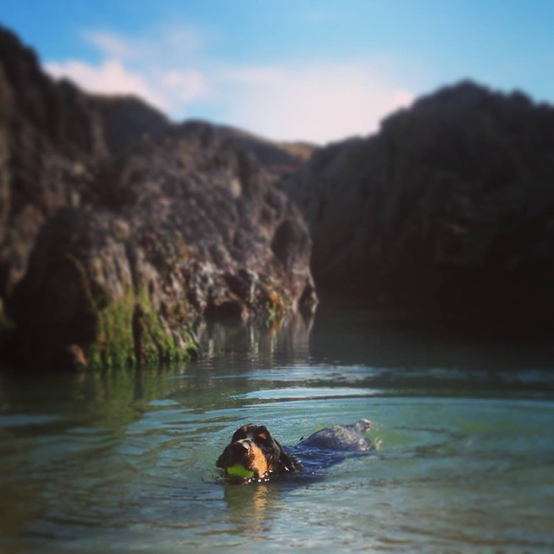 The Drifty's Top 4 Places to Walk Your Dog in Cornwall